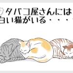 てまきや:エピソードイメージ(「眠る猫」イラストAC)