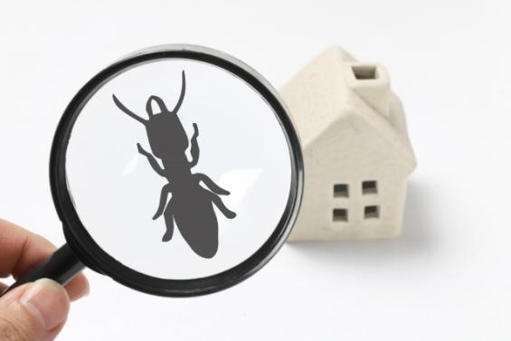 虫眼鏡とシロアリとミニチュアの家(PhotoAC)