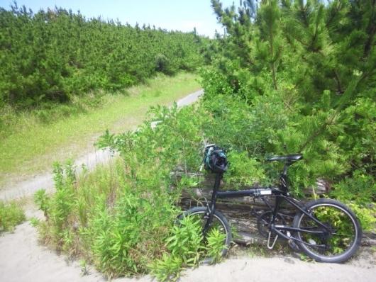 一本奥の道(ここが自転車道?)