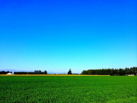農村風景 小麦畑と青空(PhotoAC)