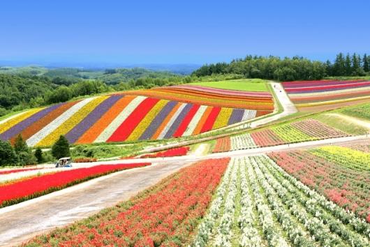 北海道 美瑛の風景(PhotoAC)