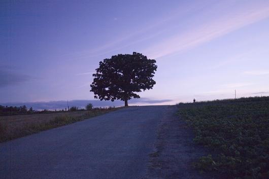 セブンスターの木の夕暮れ(sozai-free.com)