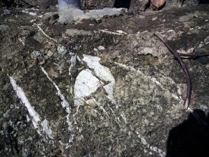 貝の化石(03-2)