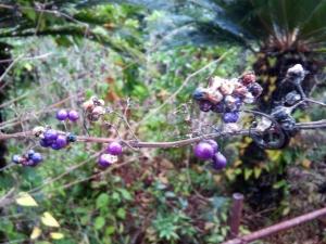 紫の木の実