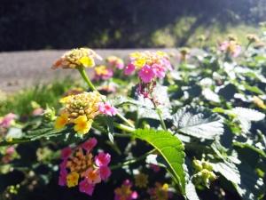 道端の花(2)