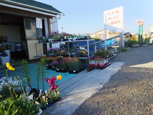 千田のお花畑(1)